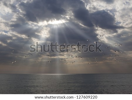gulls flying through day break in the morning over the sea and sun beam - stock photo
