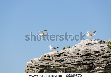 Gulls in flight and sitting on rock on blue sky background