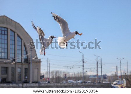 Gulls in Riga central market