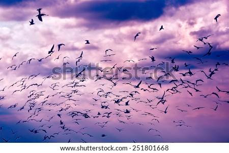 Gulls in the sky - stock photo