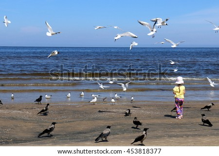 gulls live on the sea and love when people give them food