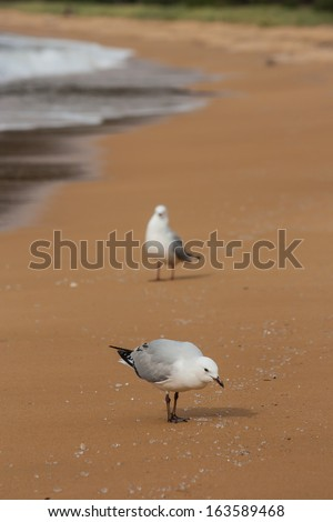 gulls on beach - stock photo