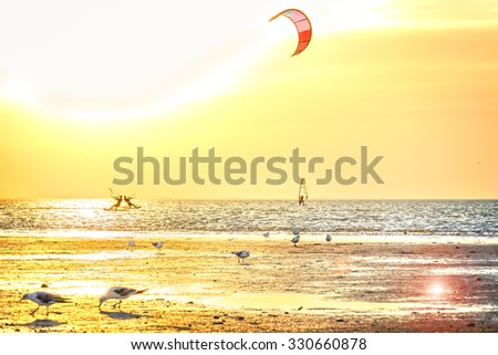 Gulls on the beach against the sea and the golden sunset, backlit - stock photo
