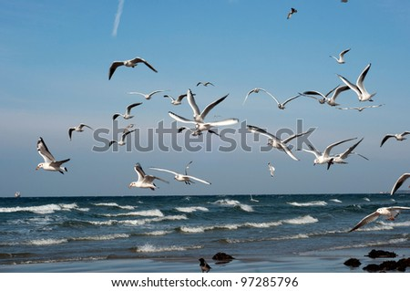 Gulls over the waves - stock photo