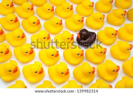 gum ducks yellow and one black  - stock photo