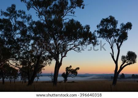 Gum trees and farmland on Darling Downs, Australia at sunrise - stock photo