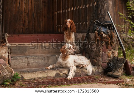 Gun dog near to shot-gun and trophies, horizontal, outdoors - stock photo
