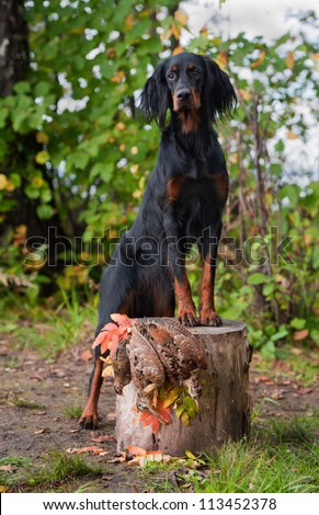 Gun dog near to trophies, vertical, outdoors - stock photo