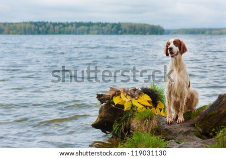 Gun dog near to trophy, horizontal, outdoors - stock photo