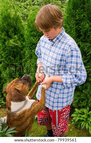 Guy playing with a puppy German Boxer