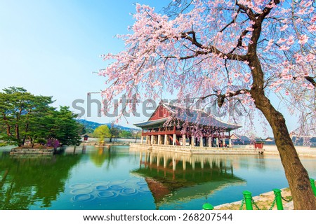 Gyeongbokgung Palace with cherry blossom in spring,Korea - stock photo
