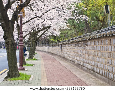 GYEONGJU, SOUTH KOREA -?? APRIL 11, 2014: Alley of blooming cherry trees in Gyeongju during annual Cherry Blossom Festival  - stock photo