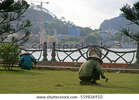 HA LONG BAY, VIETNAM - JUNE 4, 2015: street worker is pulling up weeds of the lawn outdoor in Ha Long, Vietnam