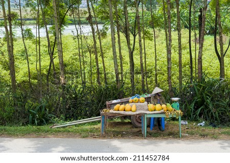 HA NOI, VIETNAM - SEP 25: Unidentified woman sells papayas on the rural street in Duong Lam Ancient Village on Sep 25, 2012 - stock photo