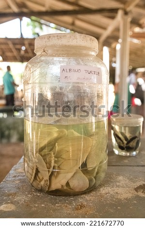 HABARADUWA, SRI LANKA - MARCH 11, 2014: Albino turtles in glass jar at Sea Turtle Farm and Hatchery. The center was started in 1986 and up to now they released more than 500,000 Turtles to ocean - stock photo