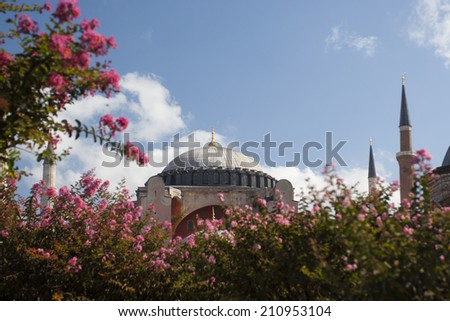 Hagia Sophia with pink flowering plant in foreground
