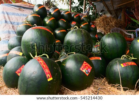 HAI DUONG, Vietnam, December 30, 2106 Gia Loc rural, Hai Duong province, to harvest watermelons, sell on the occasion of spring