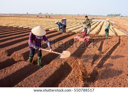 HAI DUONG, Vietnam, September 20, 2016 farmers groups, rural Hai Duong, planting carrots