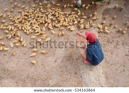 HAI DUONG, Vietnam, September 22, 2016 men, rural Hai Duong, Vietnam, poultry, baby ducks
