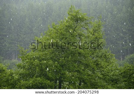Hail storm in the forest - stock photo