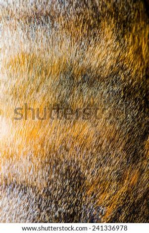 Hair of Thai Cat, Thailand. - stock photo