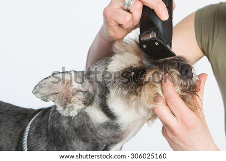 haircut a dog, spa for dog