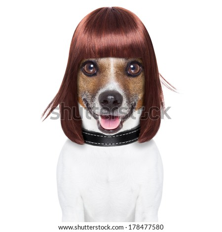 hairdresser dog ready to look awesome at the spa - stock photo