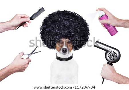 hairdresser  scissors comb dog hairdryer hairspray - stock photo