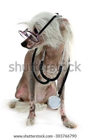 Hairless Chinese crested dog with glasses and stethoscope isolated on white