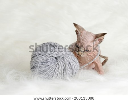 Hairless little kitten plays with a yarn ball - stock photo