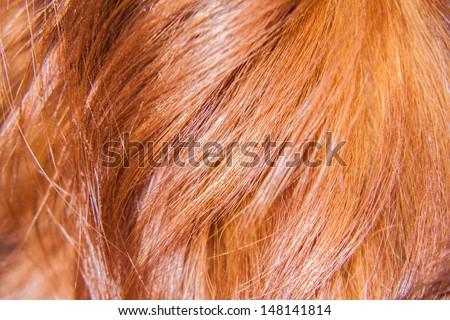 Hairs of dog - stock photo