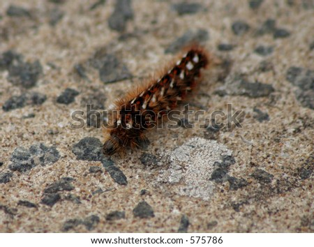 Hairy caterpillar - very shallow Depth of field