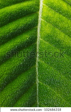 Hairy Tropical Leaf - stock photo