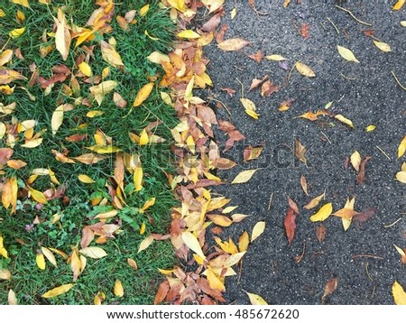Half and half of green grass and asphalt ground with falling yellow brown leaf in autumn season