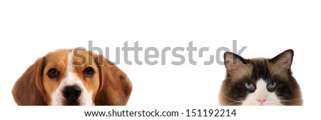 Half close up portraits of dog and cat in front on white isolated background  - stock photo