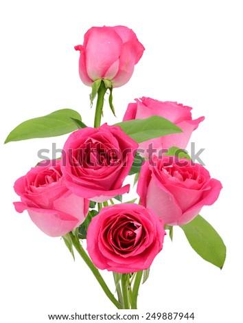 Half dozen of pink rose flowers. Isolated on white background - stock photo