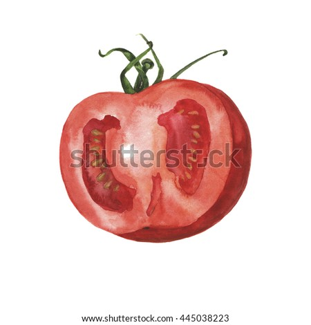 Half of fresh tomato painted by watercolor. Hand drawn illustration.