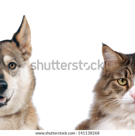 Half of muzzle close up portraits of dog and cat in front on white isolated background
