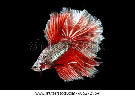 Fish tail fish beautiful - photo#26