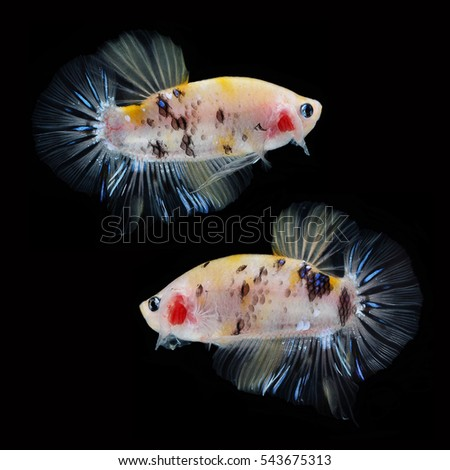 Wild koi stock photos royalty free images vectors for Koi fish tail