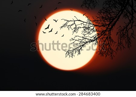 Halloween background. bat forest with full moon and dead trees. - stock photo