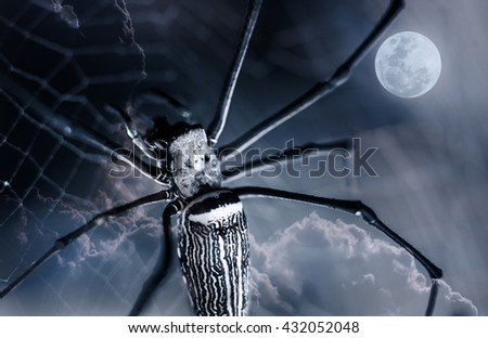 Halloween background. Closeup spider on spiderweb and beautiful nightly sky with full moon. The moon taken with my own camera, no NASA images used. Outdoors. Macro. - stock photo