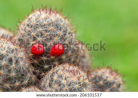 Halloween cactus, The red eyes ghost in nature