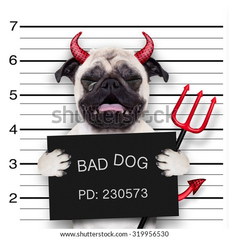 halloween devil pug dog crying in a mugshot, caught on with photo  camera, in police station jail - stock photo