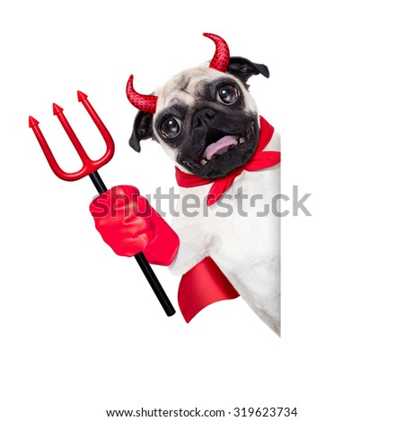 halloween devil pug dog  hiding behind white empty blank  banner or placard ,isolated on white background - stock photo
