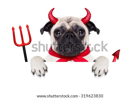 halloween devil pug dog  hiding behind white empty blank banner or placard or poster , isolated on white background - stock photo