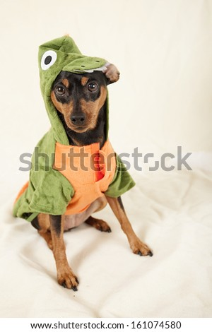 Halloween dog - stock photo