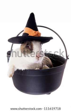 Halloween Dutch rabbit in witches pot wearing witch hat isolated on white background - stock photo