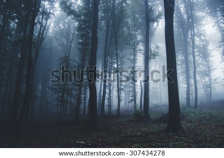 halloween forest background - stock photo