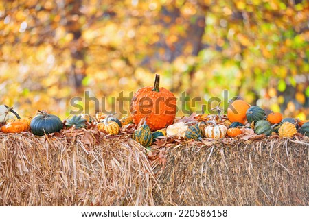 Halloween harvest of different Pumpkins on  hay with autumn nature background - stock photo